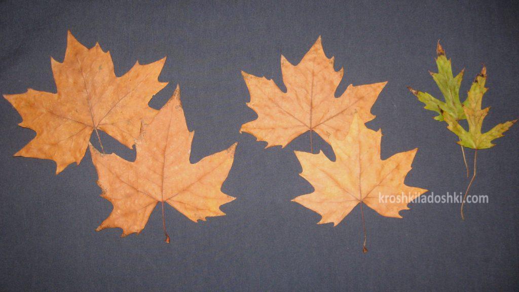 как сделать семью птичек из осенних листьев