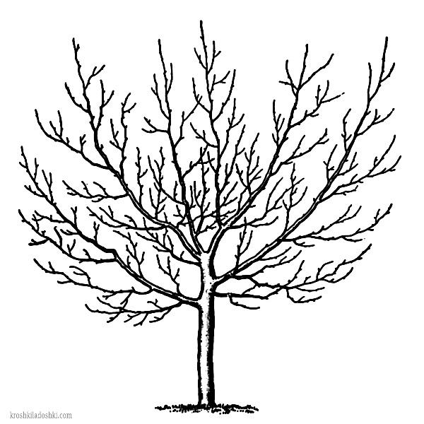 трафарет дерева