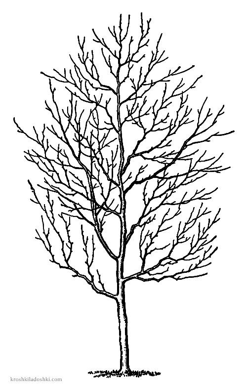 трафареты деревьев для аппликации