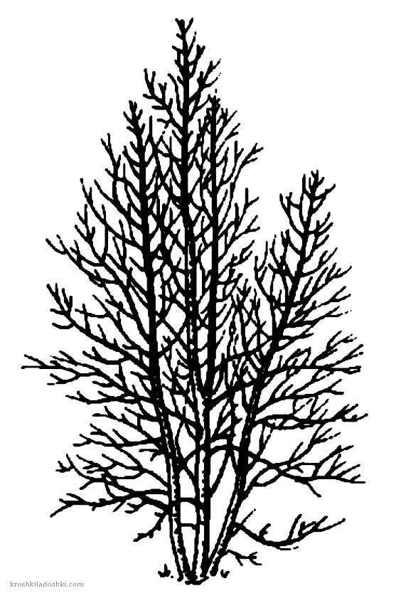высокое дерево для раскрашивания