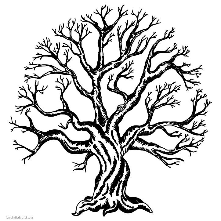 рисунок дерева скачать
