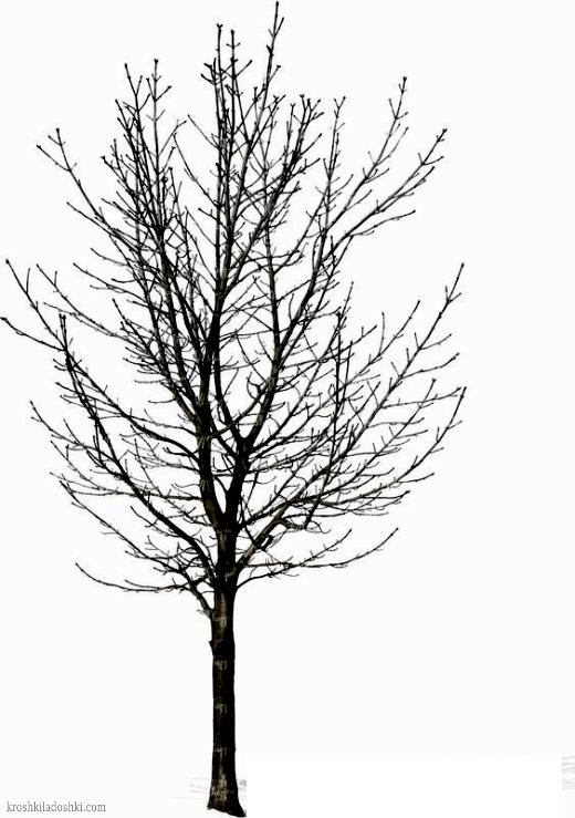 трафарет дерева без листьев