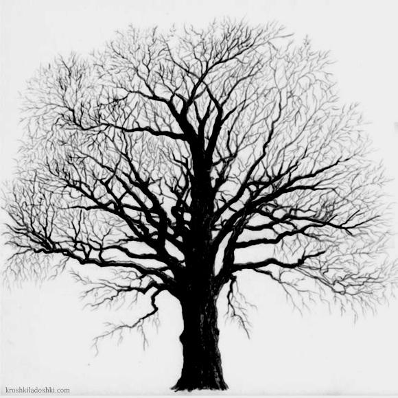 дерево с пышной кроной трафарет